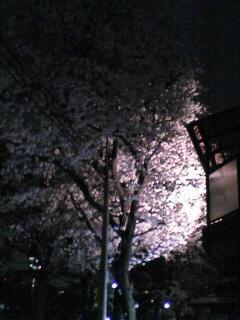 東京の桜(その4)