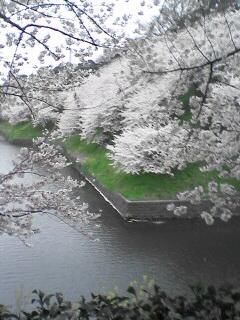 東京の桜(その1)