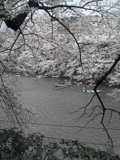 東京の桜(その2)