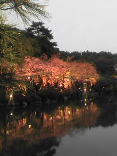 京の桜(その2)